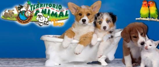 Seu animalzinho lindo e cheiroso: 70% de desconto em Banho + Tosa + Hidratação Profunda na Território Animal.